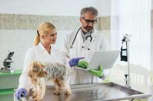 veterinarians with telemedicine consultation