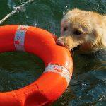 Pet Disaster Preparedness