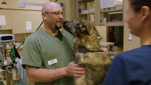 Veterinarian examines dog for pet cancer