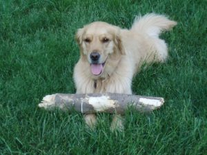 dog with a log after surviving pet cancer