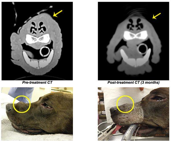 Pet Hero Bindi Before After SRS photots