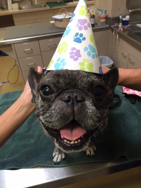 Calvin, canine brain cancer survivor