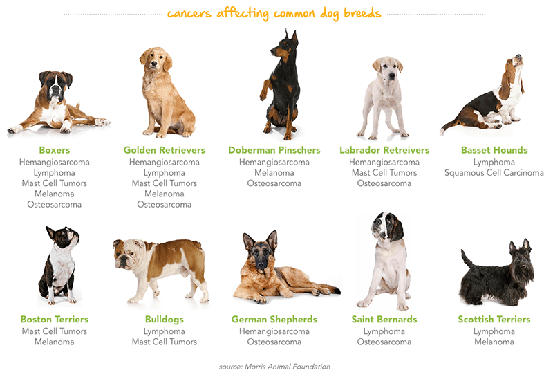 PetPlan Pet Cancer Guide