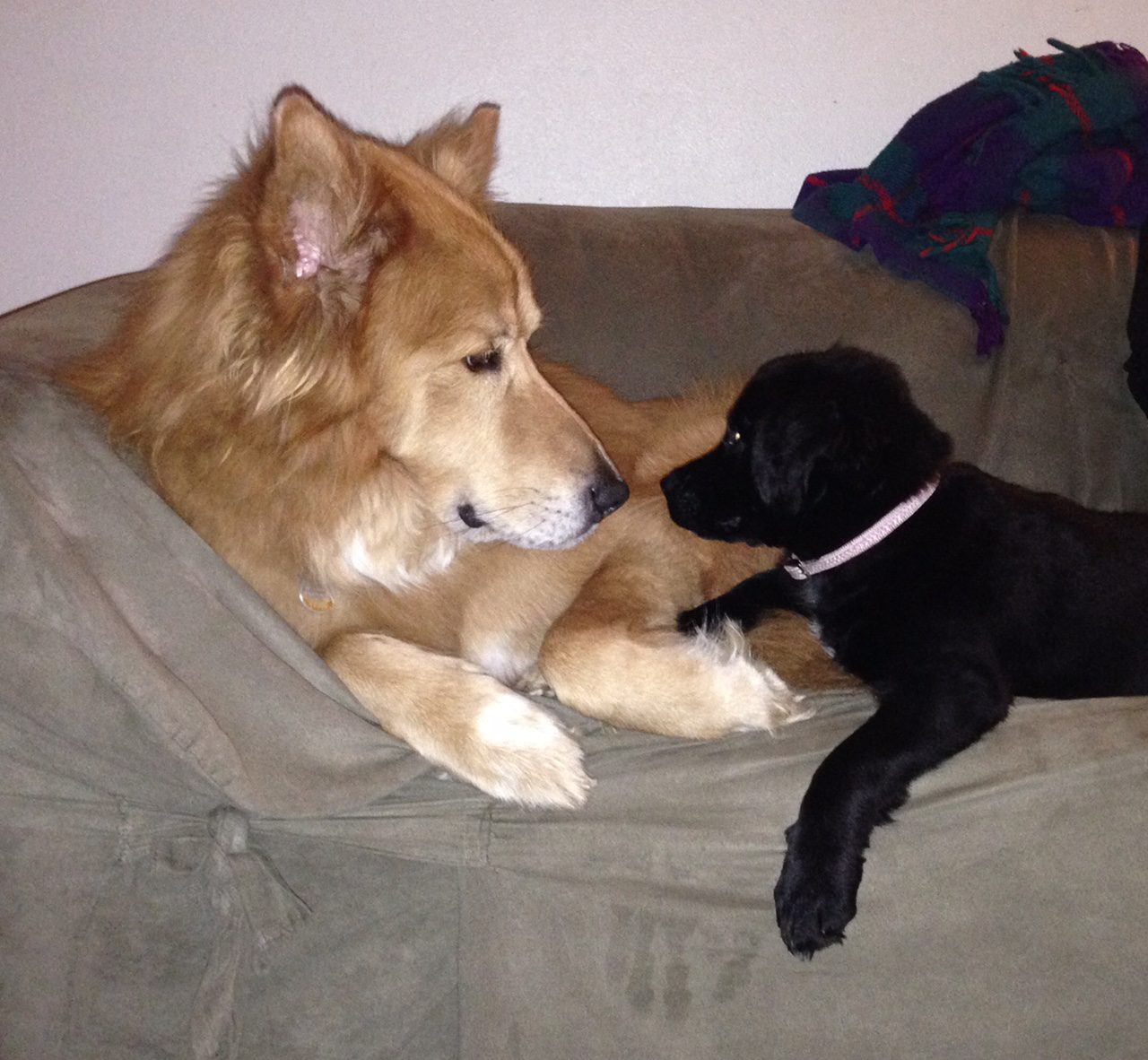 Pet Hero Karma with baby Esme