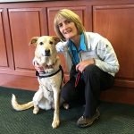 Therapy Dog Mandie at Flagstaff Medical Center
