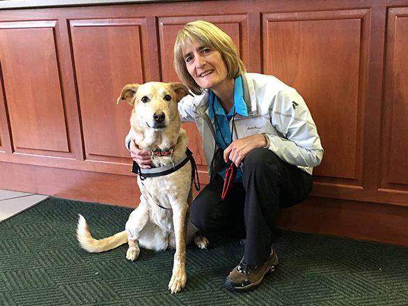 Pet Hero Mandie at the veterinary hospital in ArizonaTherapy Dog Mandie at Flagstaff Medical Center