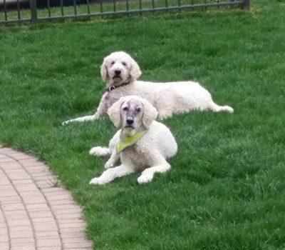 Pet Hero Cass and Mack