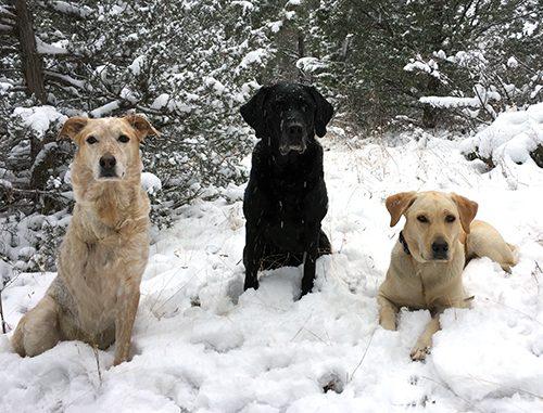Pet Hero Mandie with her dog siblings