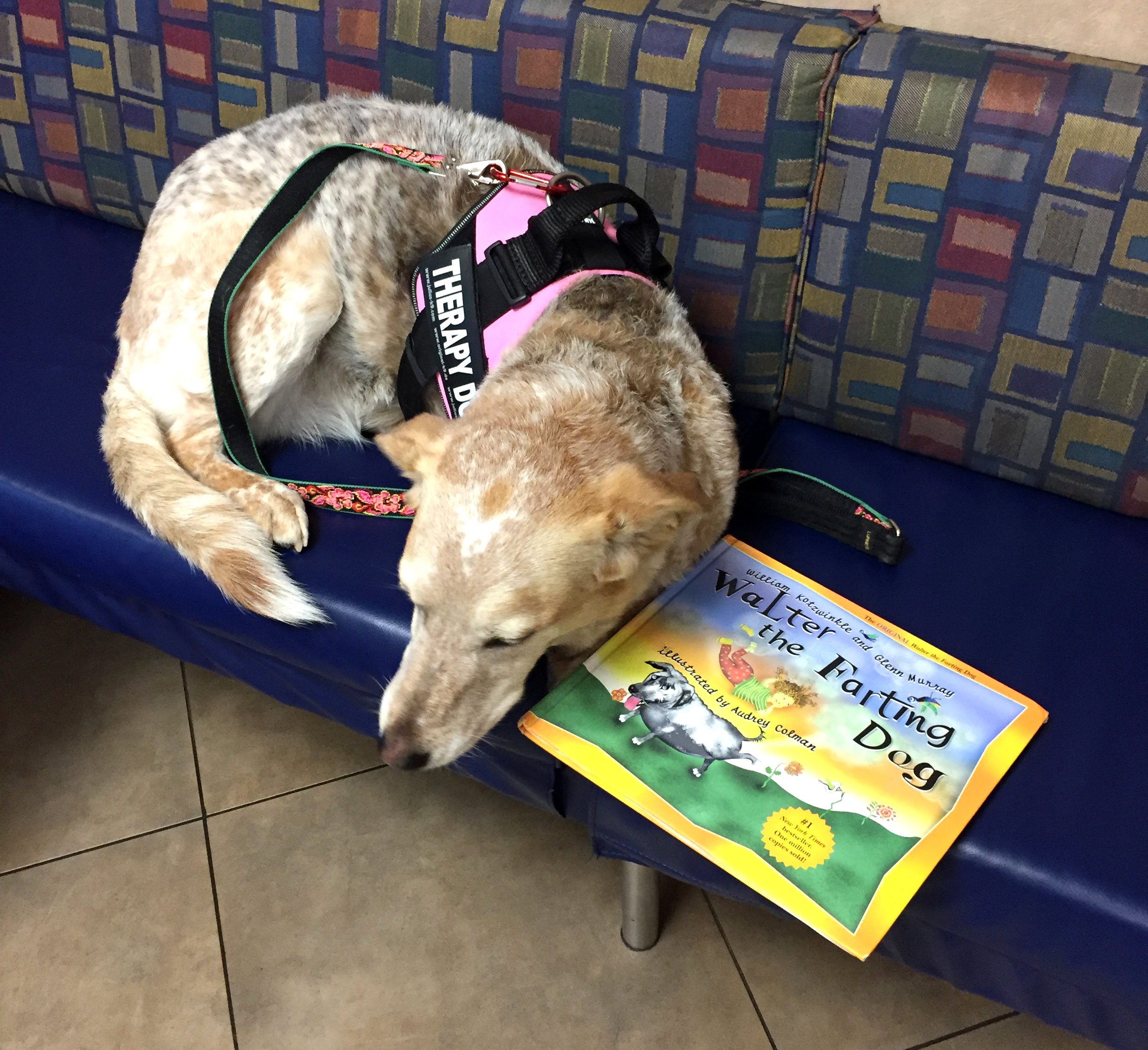 Pet Hero Mandie in AVO's waiting room