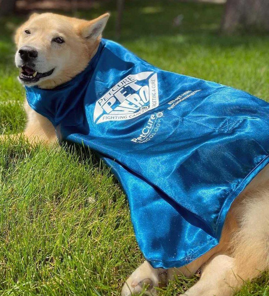 Pet Hero Molly Graney