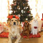 Happy Holidays from PetCure Oncology