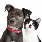 Read our blog to learn more about cats and dogs who have been treated for cancer