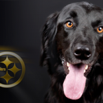 PetCure-Oncology-Pittsburg-ft