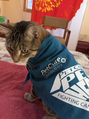 PetCure Dylan Wearing Pet Hero cape