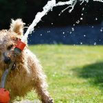 Dog Playing With Water Hose in Summer