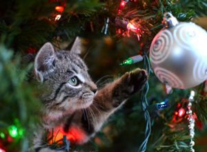 Cat plays with ornament - keep your pet safe this holiday season