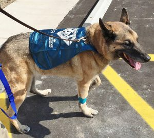 PetCure Lakeshore's first patient Brutus leaving after treatment