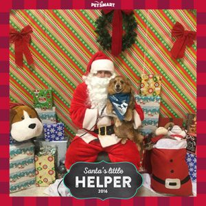 Pet Hero Gizmo the dog meets with Santa Claus