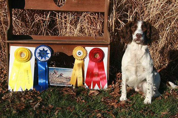 PetCure Pet Hero Otto with his AKC titles