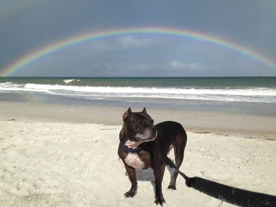 Spartacus Pet Hero PetCure Cancer Survivor Rainbow