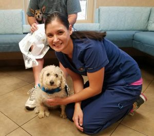 Roy receives Pet Hero cape after Stereotactic Radiation SRS/SRT for a meningioma