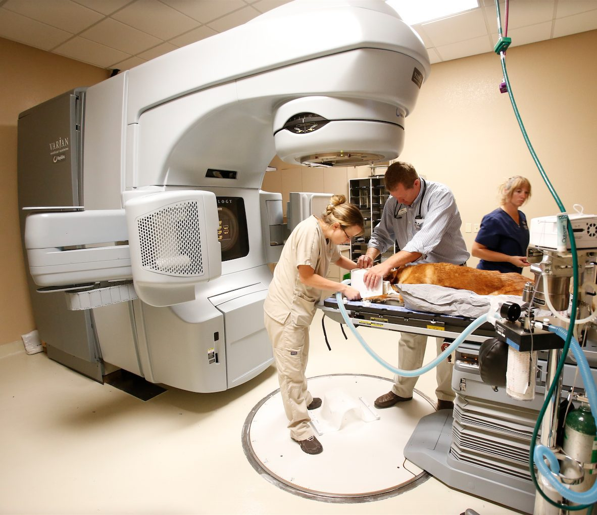 Stereotactic radiosurgery at Arizona Veterinary Oncology