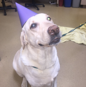 Goldie, a stereotactic radiosurgery graduate.