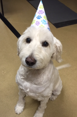 Dog 10th birthday pet cancer