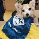 Sissy the dog wearing PetCure Pet Hero Cape
