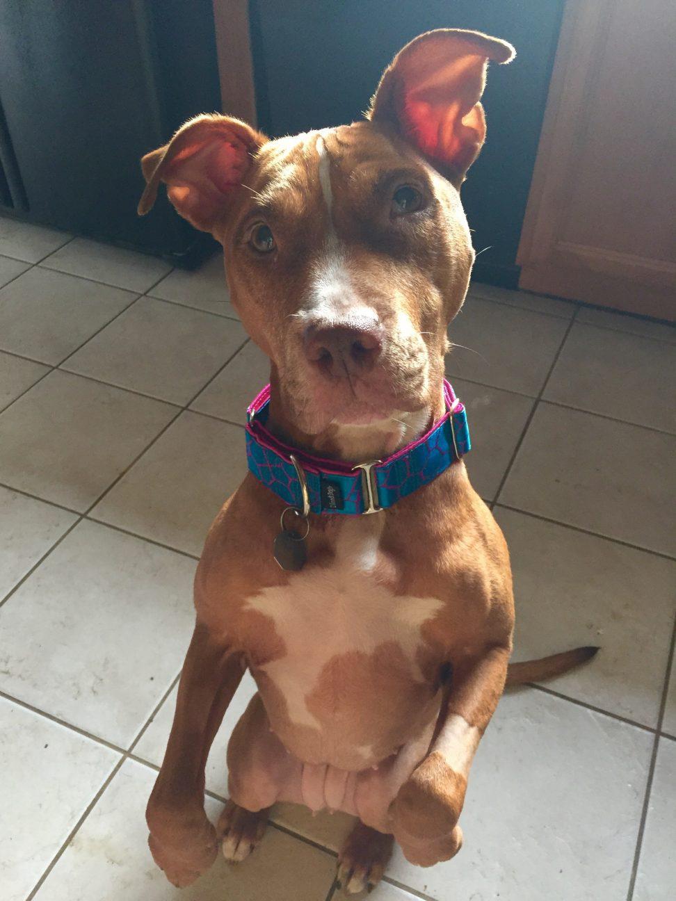 Sunny post dog cancer treatment
