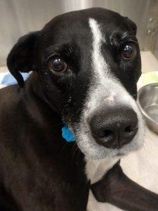 Pet Hero Sydney Dog Cancer