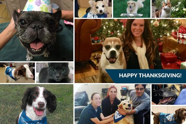 thanksgiving collage of pet heroes