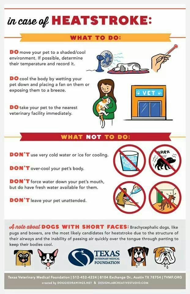 Infographic Heat Stroke in Dogs