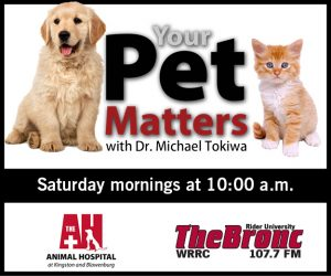 Your-Pets-Matters-banners-20133