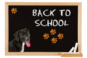 PetCure Oncology Tips for Back To School