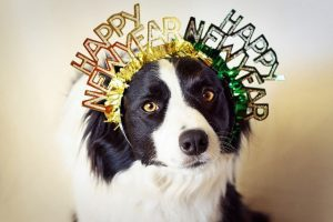 happy new year dog celebrating new years after having pet cancer