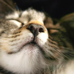 Signs of nasal cancer in dogs and cats