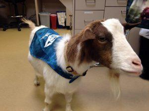 PetCure Pet Hero Grandma the Goat