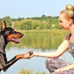 petcure-new-years-resolution-pets