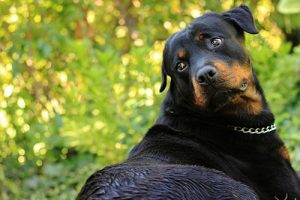 Osteosarcoma: Bone Cancer in Dogs | PetCure Oncology